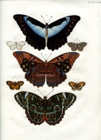 Butterflies & Moths