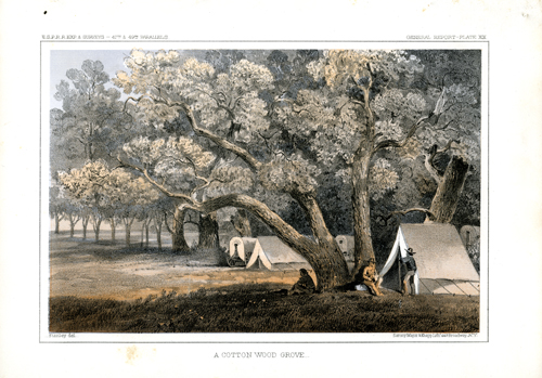 A Cottonwood Grove
