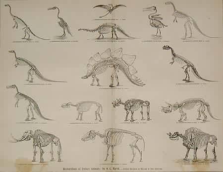 Fossil Vertebrates / Restorations of Extinct Animals