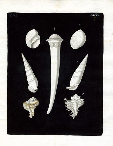 (Seven Shells)