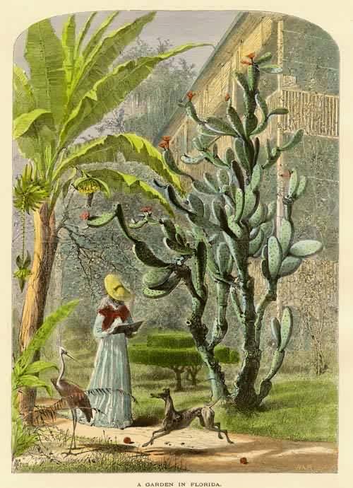 A Garden in Florida